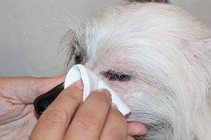 чем промыть глаза собаке в домашних условиях