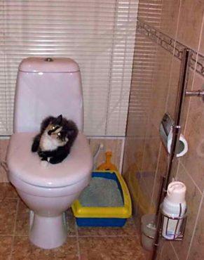 приближение кошачьего лотка к унитазу