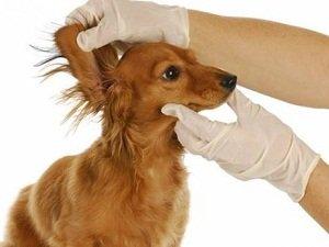 капли от отита для собак