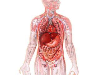 Степень выраженности вредного воздействия гельминтов зависит от локализации и количества возбудителей болезни