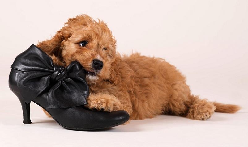 Можно ли бить собаку в воспитательных целях?