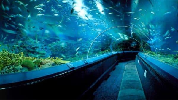 Океанический шанхайский аквариум (Китай)