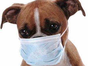 кашель у собаки причины