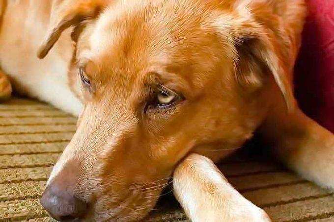 собаку беспокоят глисты