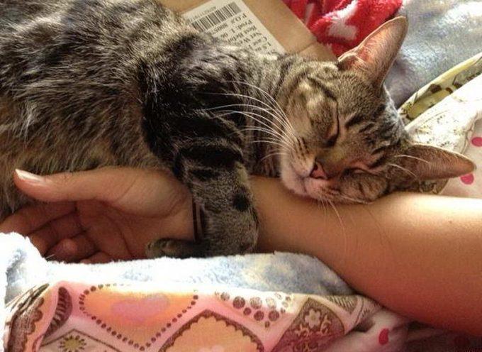 ответы почему кошки спят на человеке