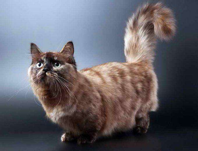 необычный окрас кошки