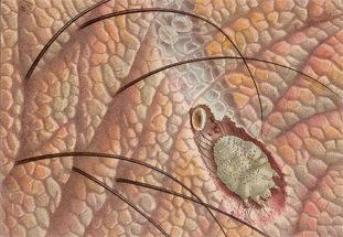Какие бывают подкожные паразиты у человека?