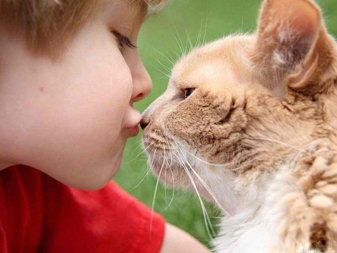 почему кошку нельзя целовать в губы