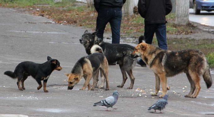 почему собаки кидаются на людей