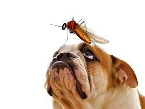 дирофиляриоз у собак фото