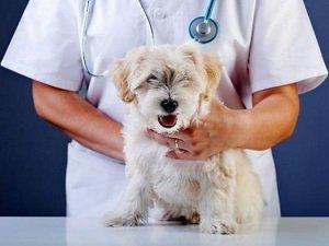 изоспороз у собак лечение