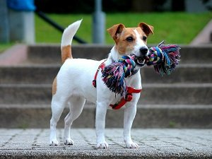 породы маленьких собак для квартиры
