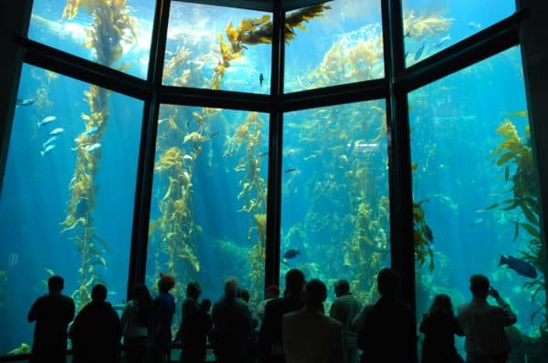 Океанариум Монтерей-Бей (Калифорния, США)