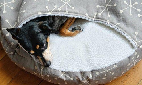 выкройка лежанки для собаки