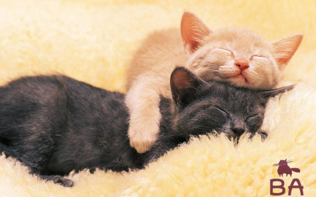 Сколько часов в сутки должны спать кошки и котята