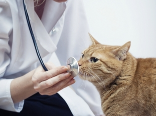 Если животное страдает от сочетанных глистных инвазий, рекомендуют комбинированный препарат и подбирают индивидуальные дозировки с врачом