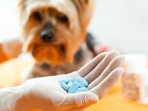антибиотик для собак синулокс