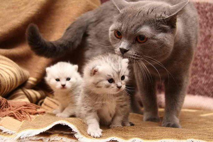когда отлучают котенка от матери кошки