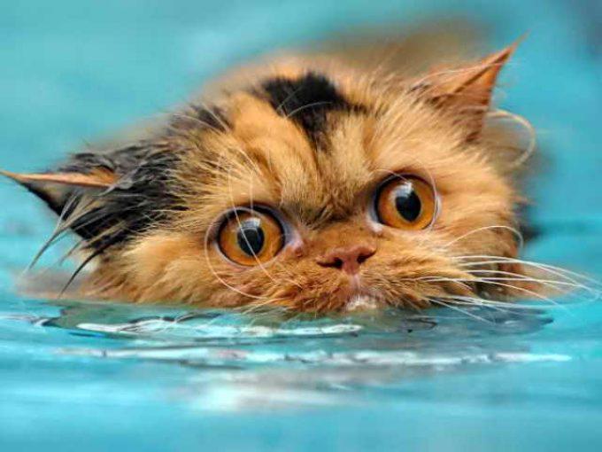 кота приучили к воде