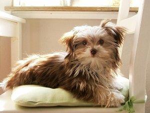 маленькие породы собак фото с названиями