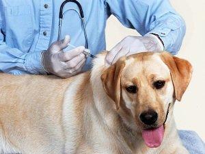 иммуномодуляторы для собак при кожных заболеваниях