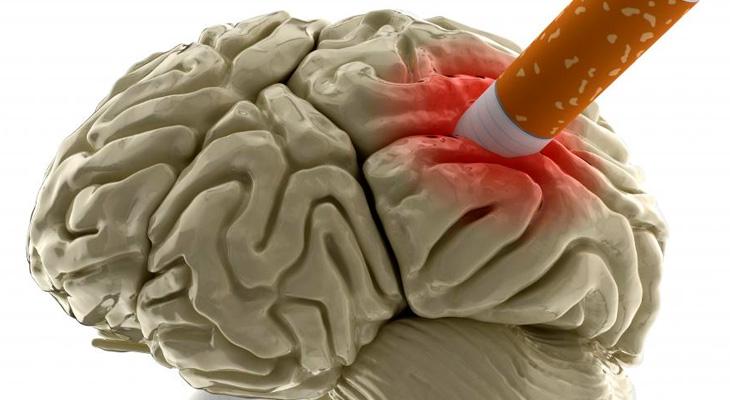 Влияние сигарет на мозг