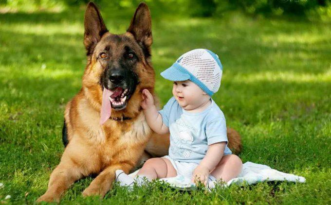овчарка с маленьким ребенком