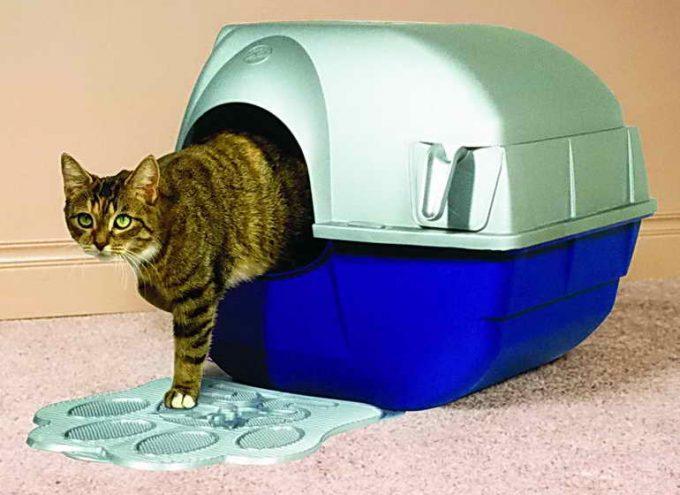 кот научился ходить в домик-лоток