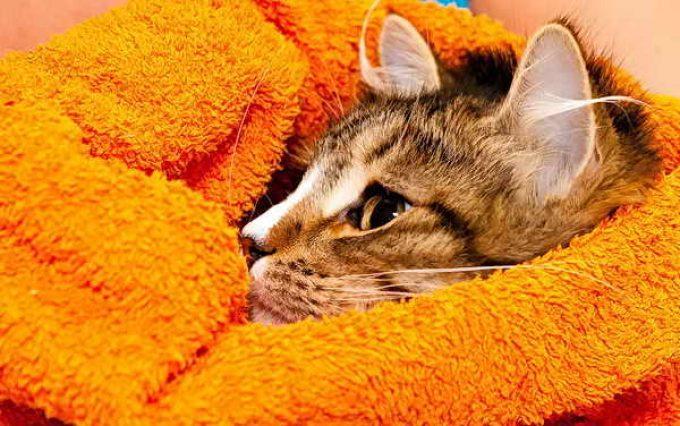 спокойный, искупанный кот