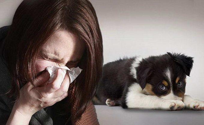 может ли быть аллергия на собаку