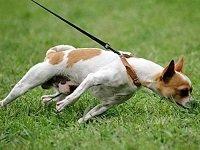 как отучить собаку подбирать на улице