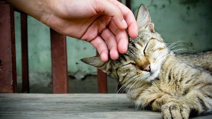 какие болезни передаются от кошек человеку