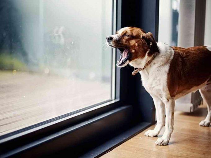 как отучить собаку лаять в квартире