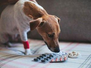 понос и рвота желчью у собаки