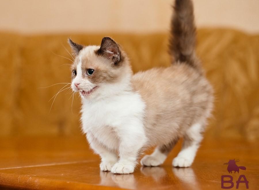 Самые маленькие кошки на планете