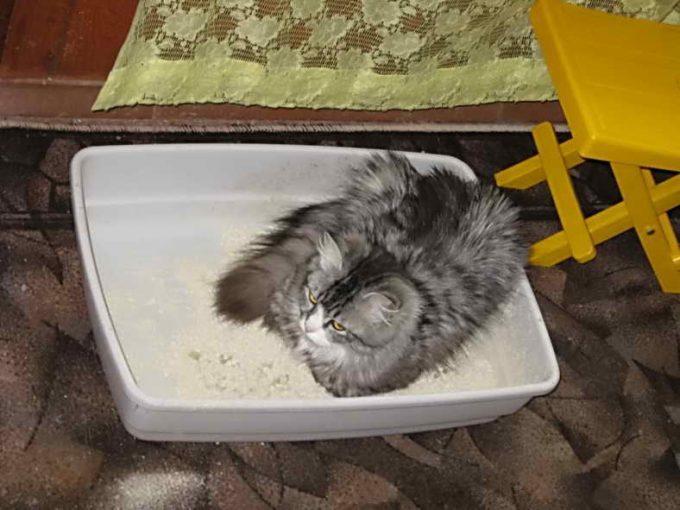 котик решил отдохнуть в лотке
