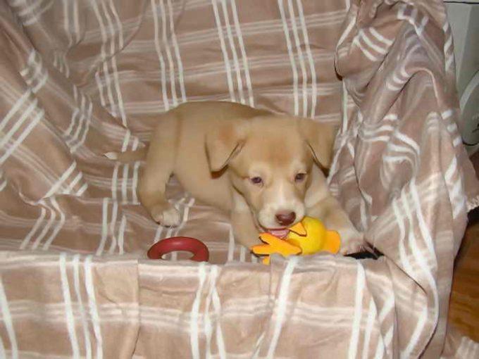 защитить щенка от глистов