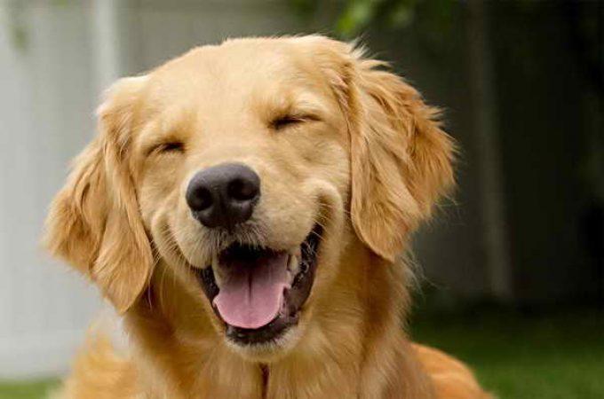 счастливый пес после лечения