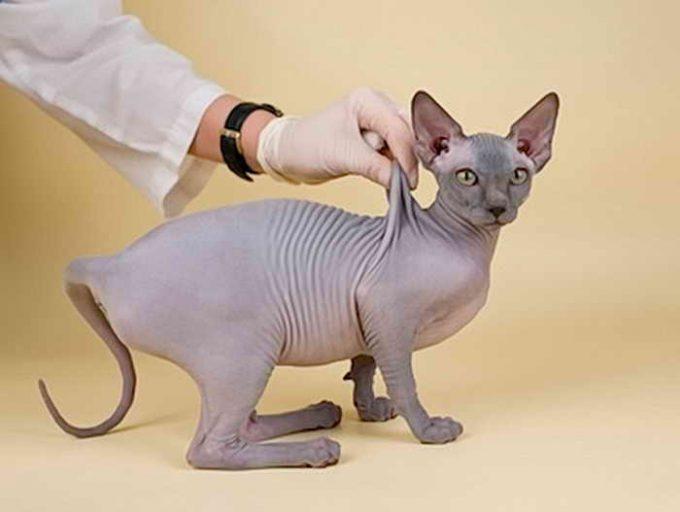 методика как делать укол в холку котенку