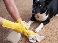 как отучить собаку гадить