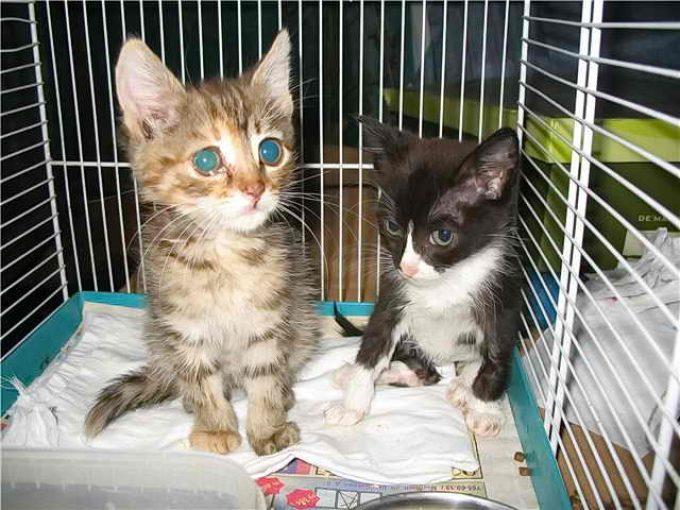 лечение рахита у котят
