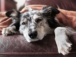 у собаки рвота с кровью причины