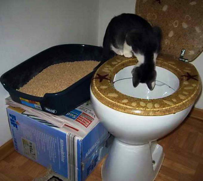 установить кошачий лоток рядом с унитазом