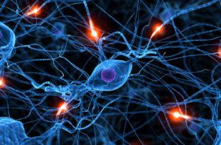 При некаторозе также возможно поражение центральной нервной системы, при этом появляются такие симптомы, как вялость и отставание в физическом и умственном развитии
