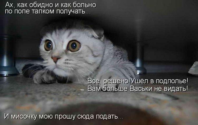 наказывать ли кота за шалости