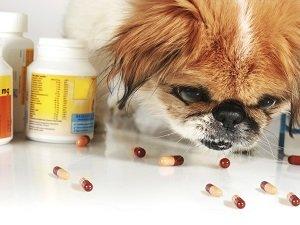 иммуномодуляторы для собак в таблетках