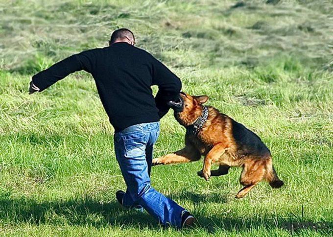 что делать, если на человека нападает собака