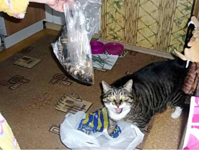 кот просит свежую рыбу