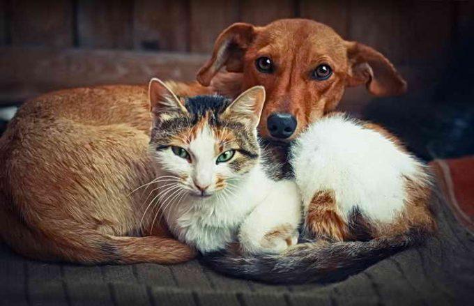 как кошка подружилась с собакой