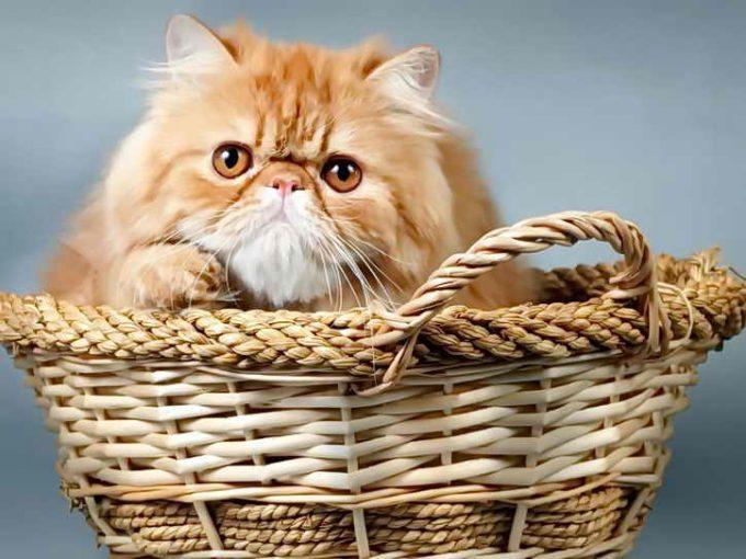 здоровый котенок после прививки